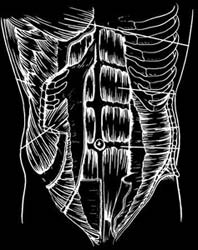 ab muscles diagram picture abdomen lower